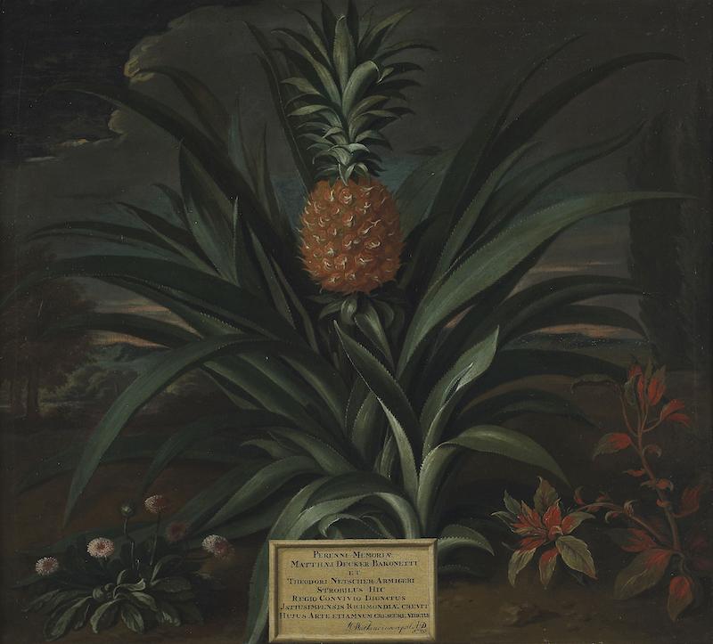 Theodorus Netscher's pineapple painting grown in Sir Matthew Decker's garden